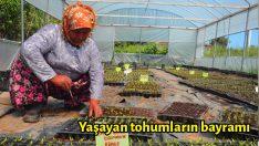 Yaşayan tohumların bayramı