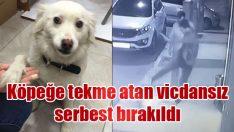 Köpeğe tekme atan vicdansız serbest bırakıldı