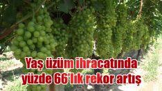 Yaş üzüm ihracatında yüzde 66'lık rekor artış
