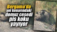 Bergama'da yol kenarındaki domuz cesedi pis koku yayıyor