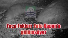 Foça Fokları 'Foto – Kapan'a' gülümsüyor