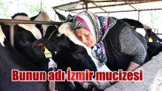 İzmir mucizesi
