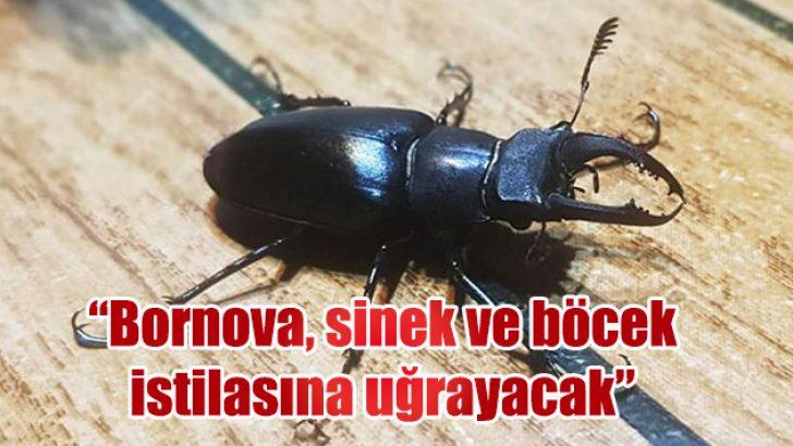 """""""Bornova, sinek ve böcek istilasına uğrayacak"""""""