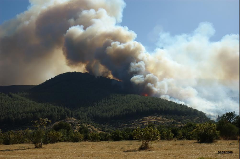 İzmir'de yangın dehşetini yaşayan dağ yeniden yeşerdi!