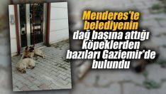 Menderes'te belediyenin dağ başına attığı köpeklerden bazıları Gaziemir'de bulundu