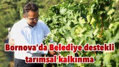Bornova'da Belediye destekli tarımsal kalkınma