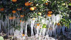 Meteoroloji'den İzmir'e zirai don uyarısı