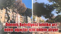 Ödemiş Belediyesi tehlike arz eden ağaçlar için önlem alıyor